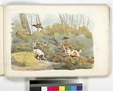 Dogs chasing pheasants