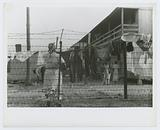 The barbed-wire enclosed camp for migratory workers at the Cannon [Canning] Company of Bridgeville, Delaware