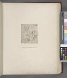 Leonardo, Uffizi, 1015