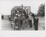 Florida migrants getting aboard the truck which will take them from Belcross, NC to another job in Onley, VA, July 1940