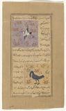 Stork (laqlaq) [top], Great crested grebe (mâlik al-hazîn)