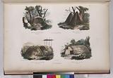 Nlle, Hollande, Cabanes du port du Roi Georges, (3 pieds de haut.), Cabanes de la baie Jervis, (6 pieds de haut.)