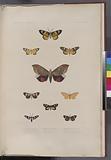 Lépidoptères: 1, Hazis agorius, Boisd, (Offak.), 2, Callimorphe lerne, Boisd, (Doreï.), 3, Aganais australe, Boisd