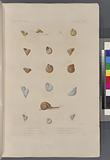 Mollusques: 1, – 4, Hélice pointue, 5, - 7, Hélice trochoïde, 8, -10, Hélice à fines raies, 11