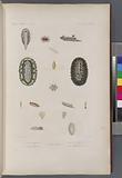 Mollusques: 1, – 4, Doris magnifique, N, 5, – 8, Doris de Naurice, N, 9, – 11, Doris réticulée, N, 12, – 14