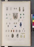 Mollusques: 1, – 3, Bulle rayée, N (Îre-de-France.), 4, - 7, Bulle banderolle, N (Îre-de-France.), 8, 9, Bulle Stiée