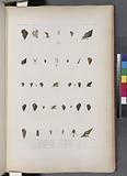Mollusques: 1, – 3, Littorine anfulifére, (Tonga-Tabou.), 1, - 7, Littorine de Sydney, 8, - 11