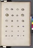 Mollusques: 1, 2, Vénus à grosses côtes, N, 3, 4, Vénus apre, N, 5, 6, Vénus Zélandaise, N, 7, 8, Vénus épaisse, N, 9