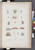 Zoophytes: 1–4, Alvéopore vert, 5–7, Pocillopore corne de Daim, 7', le même, variété verte, 8–10, Polyphyllie bassin