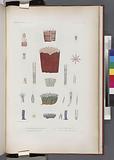 Zoophytes: 1–8, Tubipore rougeâtre, 9, Tubipore musique, 10–12, Clavulaire verte, 13–16, Clavulaire violette
