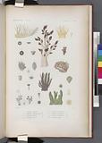 Zoophytes: 1–3, Alcyon fléxible, 4–5, Alcyon tuberculeux, 6–7, Alcyon jaune, 8–11, Alcyon rameux, 12–14
