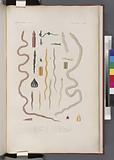Vers apodes: 1–2, Borlasie à cinq lignes, 3–4, Borlasie striée, 5–6', Borlasie à bandelette, 7–8', sa variété