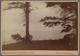 Yellowstone Lake, Stevenson Island