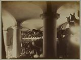 Garden of plants. Natural history cabinet, interior of a vaulted room, stuffed animals (tapirs, wild boars, rhinos, …)