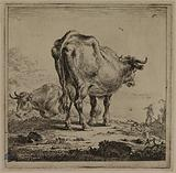 A milking cow
