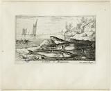 Various species of marine fish, part one, Mackerel