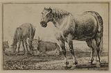 Two horses and two oxen