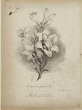 The Duke of Bordeaux sleeping in a lily