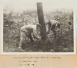 Propaganda photograph: two young people from the youth camps cutting a pine in the Landes