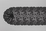 Stole of black machine lace with volutes between branches and a thin garland