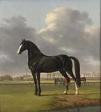 Adriaan van der Hoop's Trotter 'De Vlugge' (The Fast One) in a Meadow