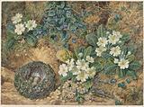 Still life of a bird's nest, violets, primroses and apple blossom