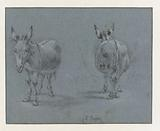 Two Studies of a Donkey, Seen from the Front and Behind
