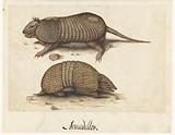 Album Sheet with Two Armadillos