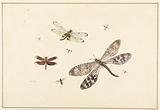 Three Dragonflies and Five Smaller Insects