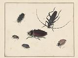 Sheet with Six Beetles