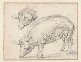 Two Studies of a Pig