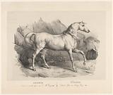 Adonis, the favorite war horse of King George III
