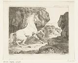 Bouncing white stallion