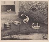 Three flamingos and a cat
