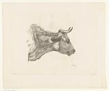 Head of cow with blade of grass in beak