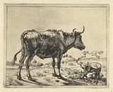 Bull standing by tree stump