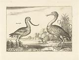 Two waders in a river landscape