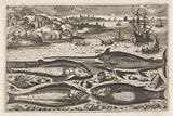 Four fish on the beach