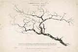 Study of bare tree branch