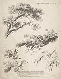 Study of branches with leaves