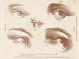 Study sheet with examples of eyes