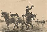 Three draft horses in the water