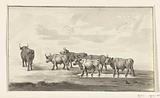 Group of six bulls