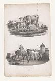 Cow with calf and shepherd boy with cows on horseback