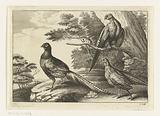 Three pheasants