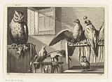 Falcons and owls in a barn