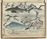 Seabirds and saltwater fish
