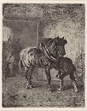 Horse gets horseshoes in a forge