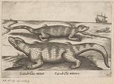 Small crocodiles
