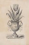 Tulip with leaves in an ornamented vase